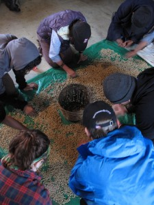 Equal Exchange delegates sorting coffee.