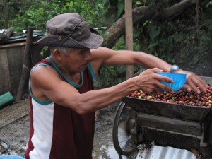 Eufemio Hurtado Terratol depulping coffee.
