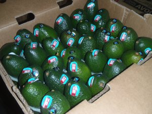 The first shipment of avocados arrives in the U.S.!