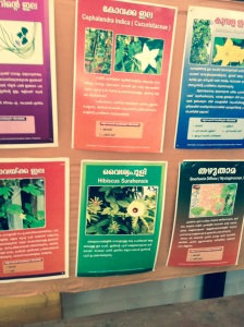 Posters lined the wall, showing the variety of wild plants, and their various properties and uses.