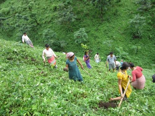 Potong farmers